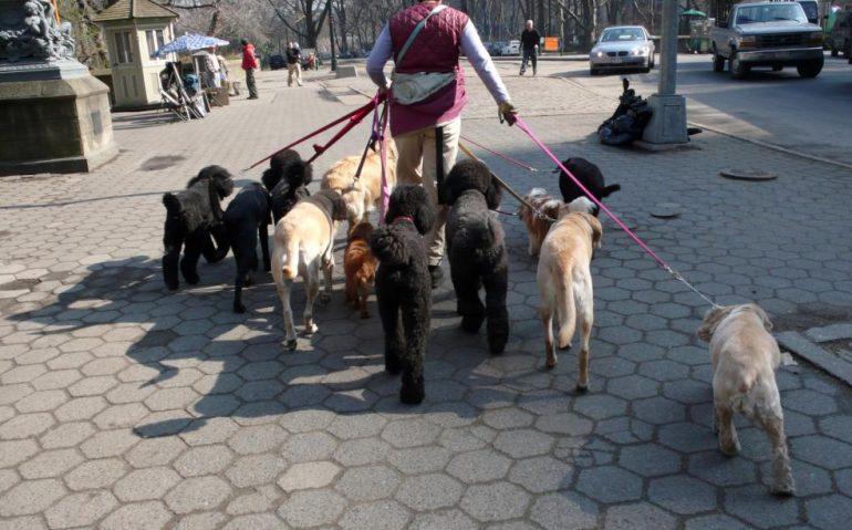 the-dog-walker.jpg